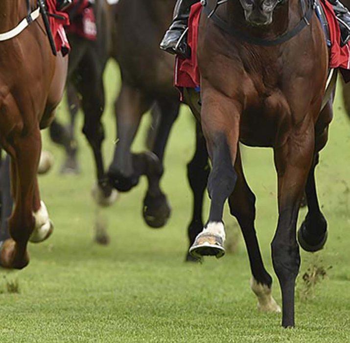 İngiltere'de yanlış atı yarışa soktular