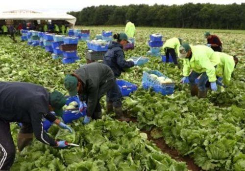 'Brexit, İngiltere'de gıda sektöründe işgücü krizine yol açabilir'