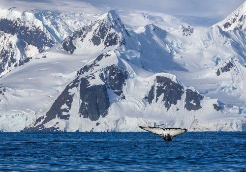 Buzullar eridikçe insanlığın hiç tanımadığı virüs türleri ortaya çıkıyor
