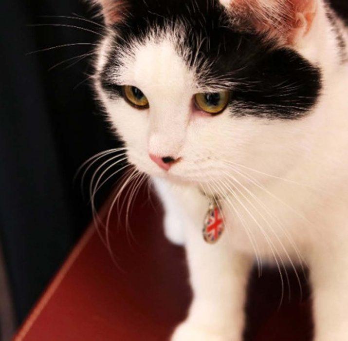 İngiltere ilk diplomat kedisini Ürdün'de atadı