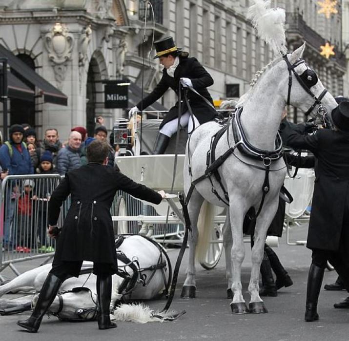 Yeni yıl töreni atı korkuttu