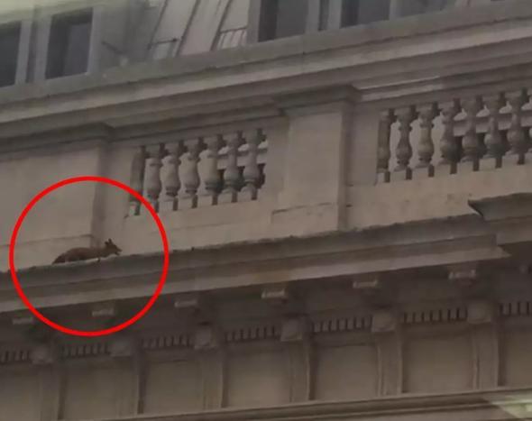 Dublin'de fare istilası