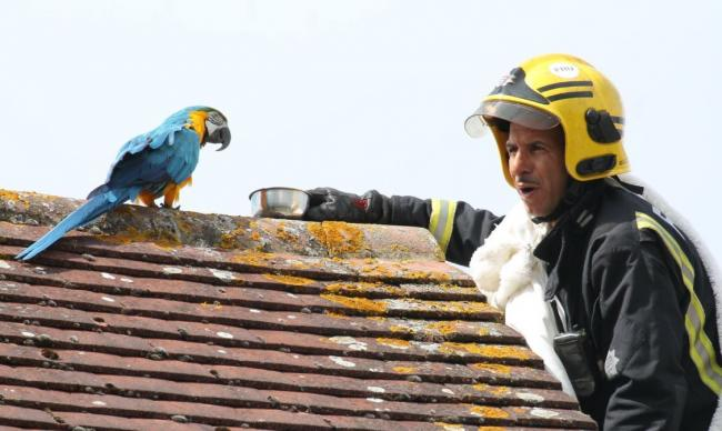 Parrot in Edmonton swears at firefighter