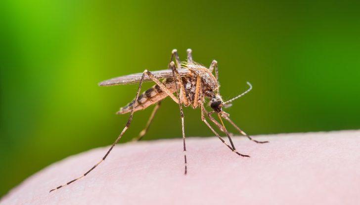 Bu buluş sivrisinekleri tarih sahnesinden silecek