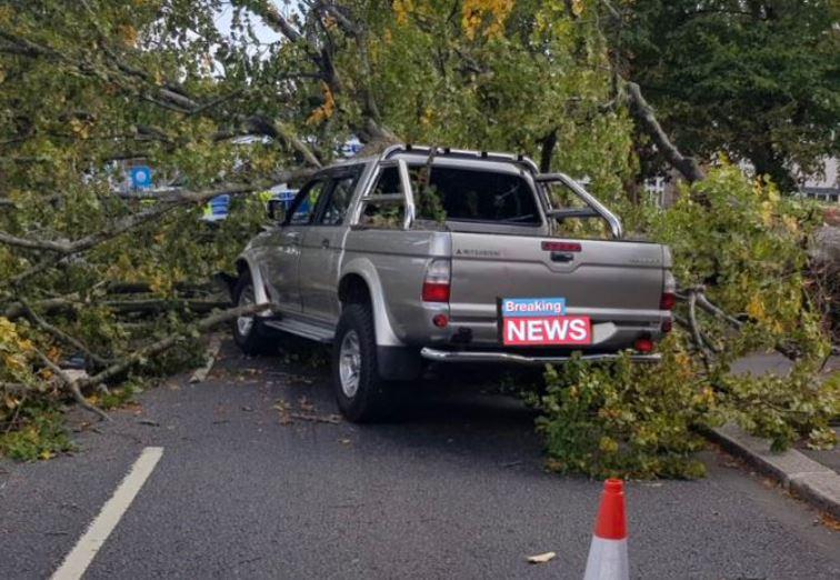 Storm Ali, Enfield'te ağaçları uçurdu