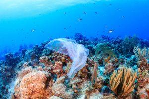 Single use plastics banned by European Parliament