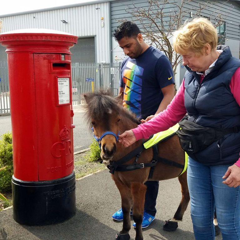 Digby, görme engelli genç için İngiltere'nin ilk rehber atı olacak