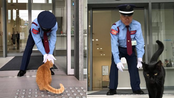 2 kedi, 2 yıldır sanat müzesine girmeye çalışıyor