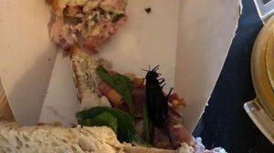 Sandviçten hamamböceği çıktı!