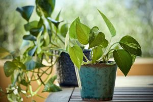 Cleaning your home air quality with plants