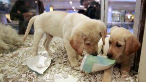 İngiltere'de yavru kedi ve köpeklerin pet shoplarda satışı yasaklandı