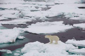 Kuzey Kutbu, tarihinin en sıcak 5 yılını geçirdi