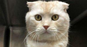 Tayvan'da kutuya koyduğu kedisini barınağa postalayan kişiye 2 bin dolar ceza