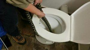 Avustralyalı kadını tuvalette piton yılanı ısırdı