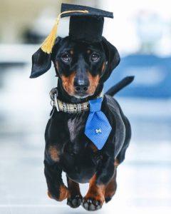 İngiltere'de ilk: Terapi köpeği işe alındı