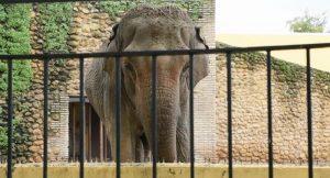 'Dünyanın en üzgün fili', hapsedildiği kafeste öldü