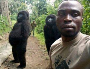 Korumalarıyla selfie çektiren goriller