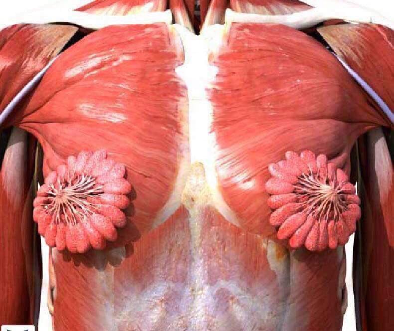 Twitter'da  kadın anatomisi görseli viral oldu