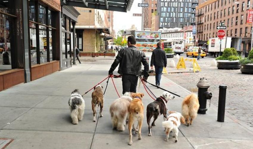 Doktorlar köpek sahiplerini uyardı