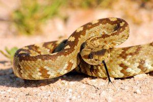 Her yıl en az 120 bin insan, yılan sokması nedeniyle ölüyor