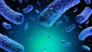 NHS food review after 5 die from listeria outbreak