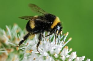 Turkish bee found in a suitcase is a threat to the British species