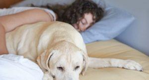"""""""Kadınlar için bir köpekle uyumak bir erkekle uyumaktan daha iyi"""""""