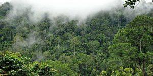 Amazon Ormanları dünya için neden önemli?