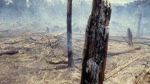 Amazon yağmur ormanlarında her dakikada bir futbol sahası büyüklüğünde alan yanıyor