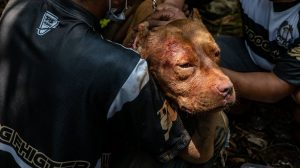 Köpek dövüştürenlere hapis cezası verildi