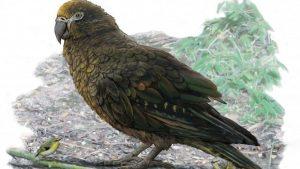 Yeni Zelanda'da 19 milyon yıl önce yaşayan 1 metrelik papağanın fosili bulundu