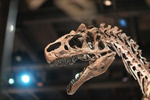 Tayland'da yeni bir dinozor türü bulundu