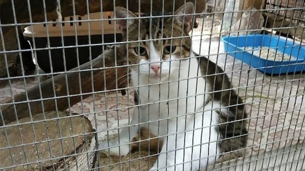 Kaçakçılıktan gözaltına alınan kedi firar etti