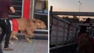 Polis köpeklerle müdahale edince eylemciler aslan getirdi