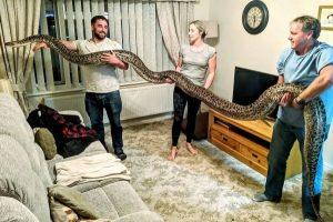 Aile yanında yaşayan dünyanın en uzun yılanı
