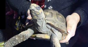 Noel kutlamasına götürülmeyen kaplumbağa evi yaktı