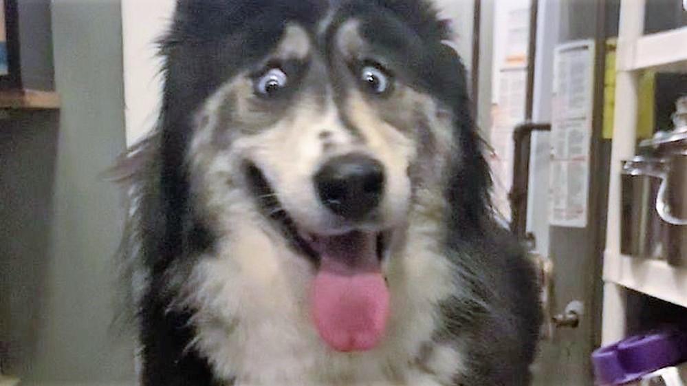 'Bakışları tuhaf' diye terk edilen köpeği sahiplenmek için 150 kişi başvurdu