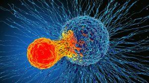 Bağışıklık sisteminin yeni keşfedilen özelliği 'tüm kanserleri tedavi edebilir'