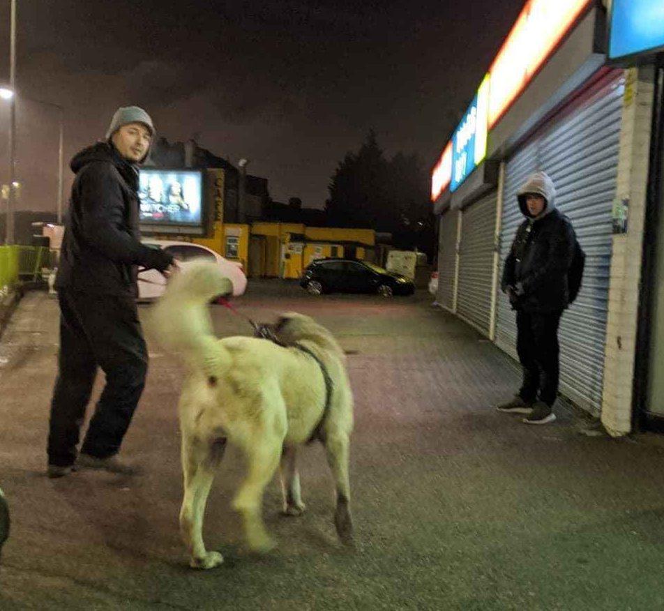 Sivas Kangalı Londra'da şüpheli bir kişiyi etkisiz hale getirdi