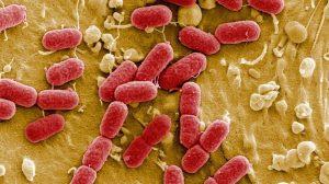 Yapay zeka sayesinde en tehlikeli bakterileri öldüren antibiyotik bulundu
