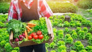 Hükümet vatandaşlardan meyve sebze toplamalarını istedi