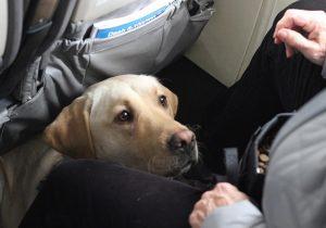 Larnaka'dan Londra'ya uçuş: 80 İngiliz, 36 köpek, 14 kedi