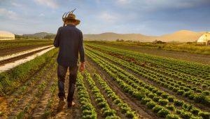 İngiltere'de mühendisler, avukatlar çiftçi olabilir