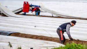 Covid-19 krizi Avrupa'da göçmen işçi gerilimini körüklüyor