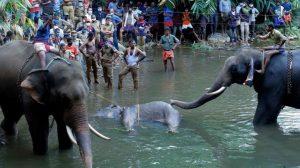'İçine patlayıcı yerleştirilen meyve yiyen' hamile filin ölümü Hindistan'da infial yarattı