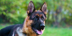 Koronavirüs olan köpek hayatını kaybetti