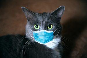 KKTC'de ilk kez, evcil bir kediye Covid-19 bulaştı