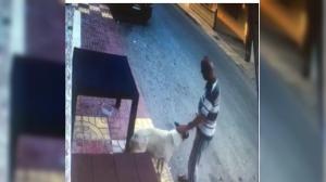 Köpeğe cinsel saldırıda bulunan adam cezaevine gönderildi