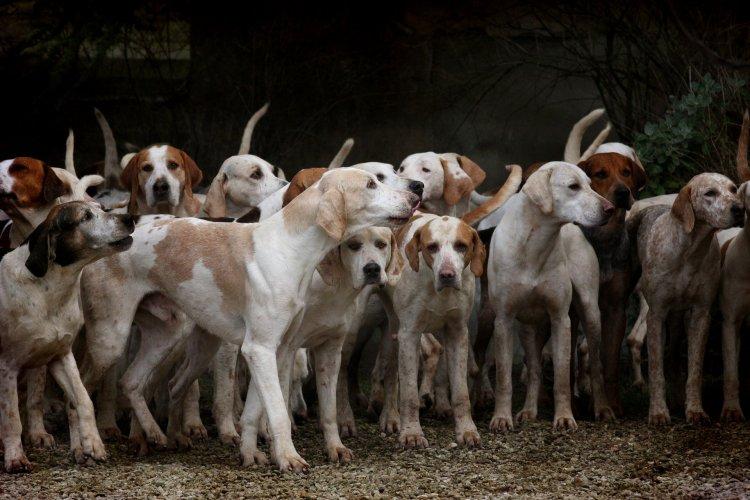 Hindistan'ın Nagaland eyaletinde köpek eti yasaklandı