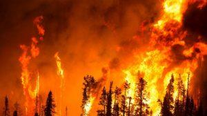 Orman yangınlarının yüzde 75'i insan eliyle çıkarılıyor
